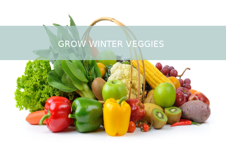 Grow plants in the winter