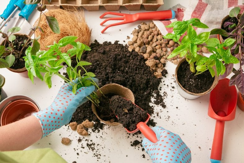 Mom's guide to gardening