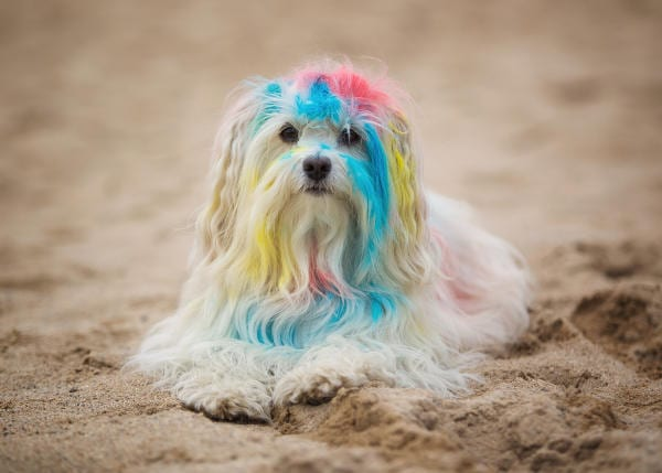dog hair died several colors