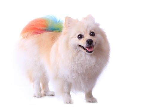 cool aid dog died hair